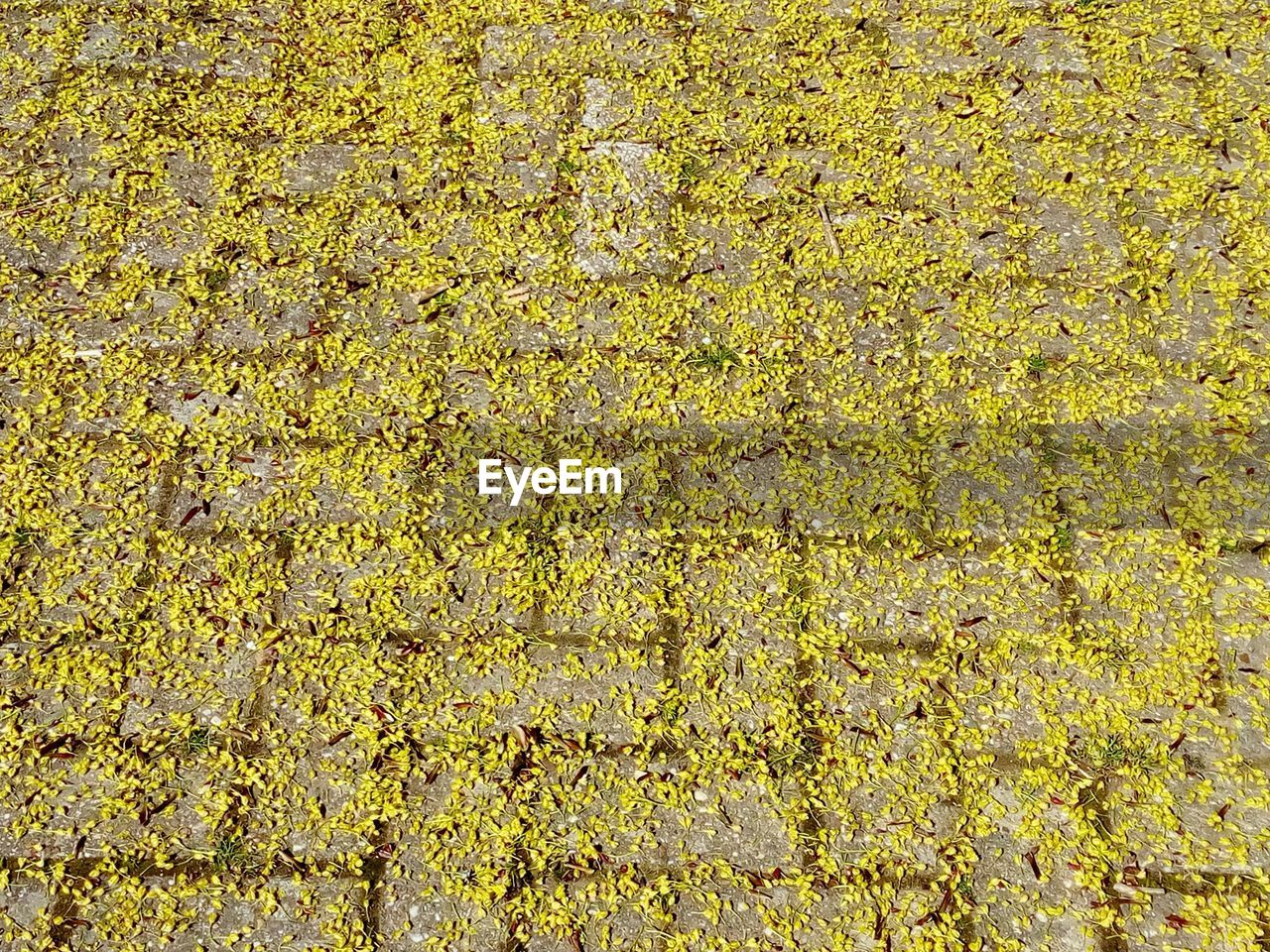 yellow, full frame, backgrounds, no people, day, nature, abundance, plant, textured, growth, high angle view, outdoors, beauty in nature, green color, pattern, freshness, agriculture, field, flower, autumn, lichen