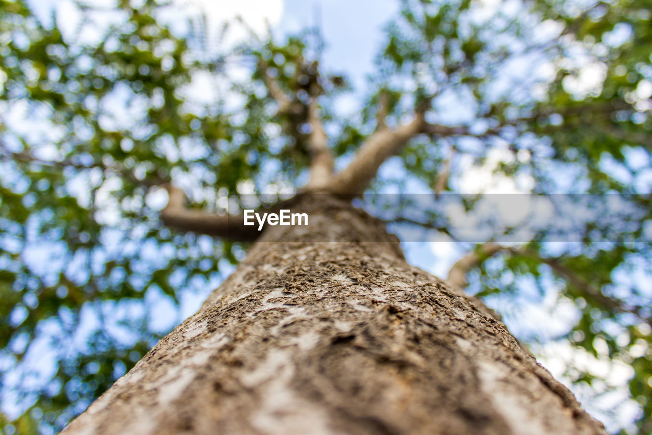 tree, tree trunk, low angle view, nature, growth, branch, day, outdoors, wood - material, no people, beauty in nature, forest, close-up, sky