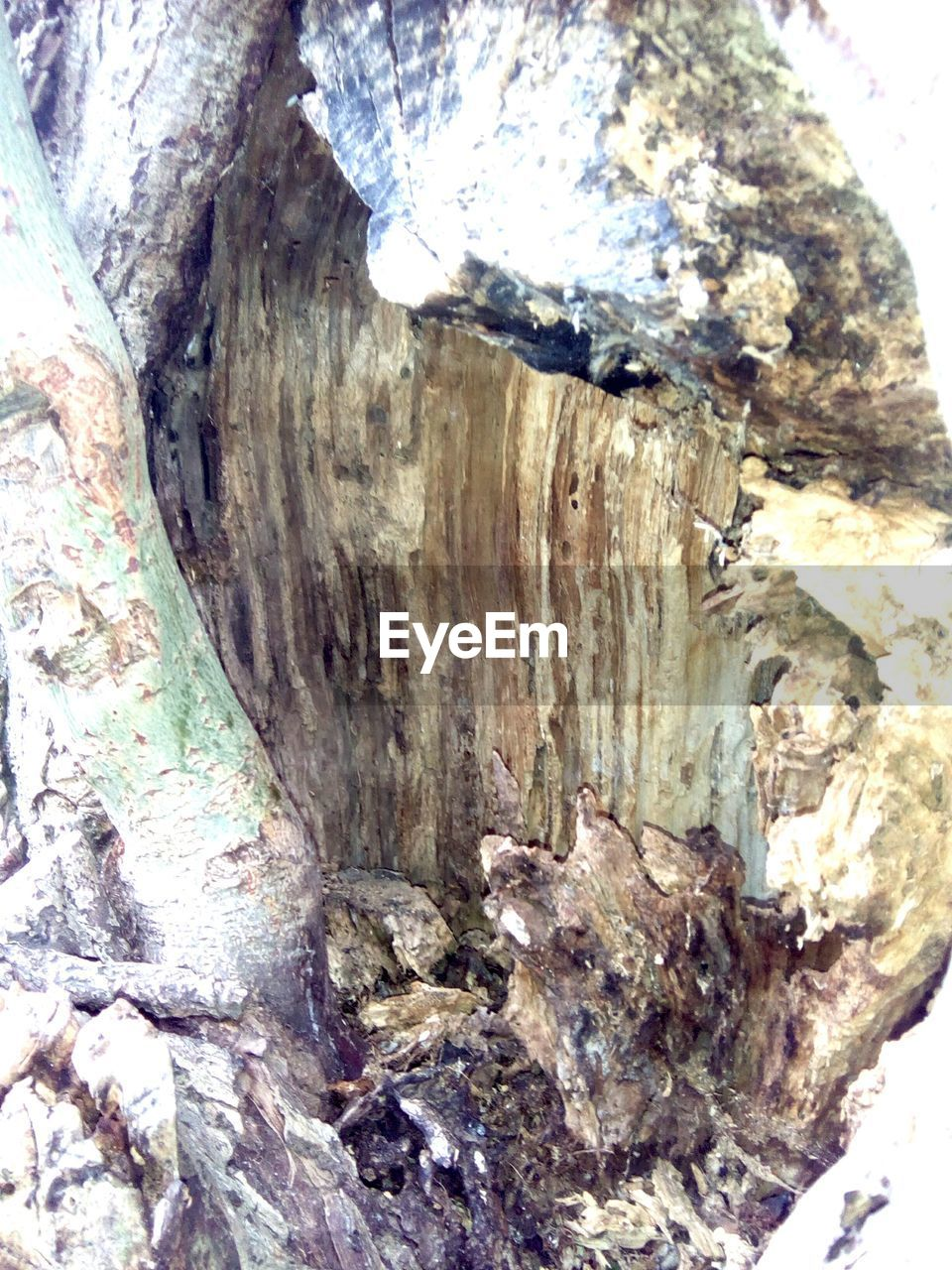 tree, textured, trunk, tree trunk, close-up, wood - material, no people, rough, day, nature, bark, outdoors, pattern, plant, natural pattern, backgrounds, full frame, wood, sunlight, plant bark