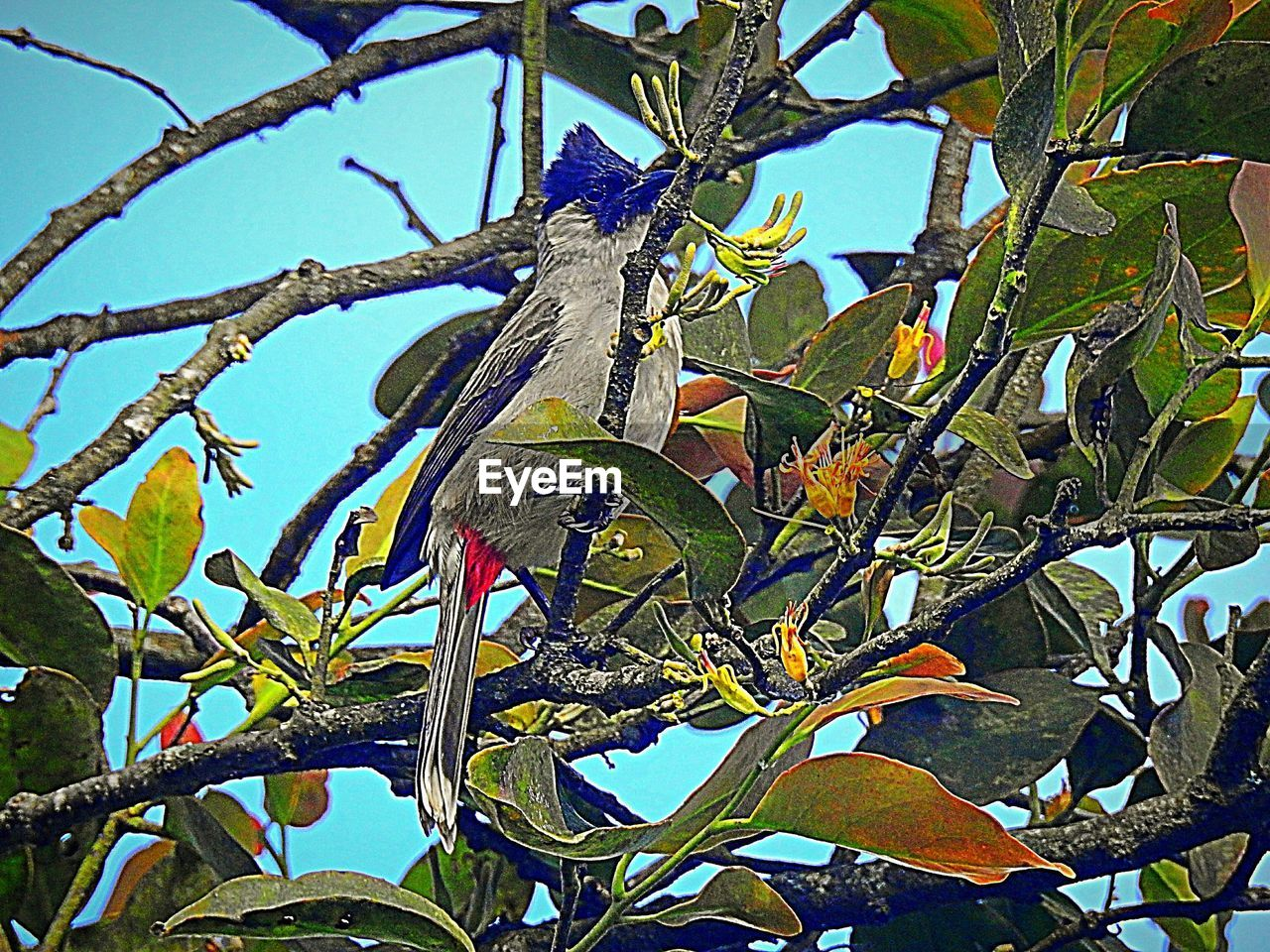 animal themes, animal, bird, animal wildlife, animals in the wild, vertebrate, plant, one animal, tree, branch, plant part, leaf, perching, low angle view, nature, no people, day, growth, parrot, beauty in nature, outdoors, rainbow lorikeet