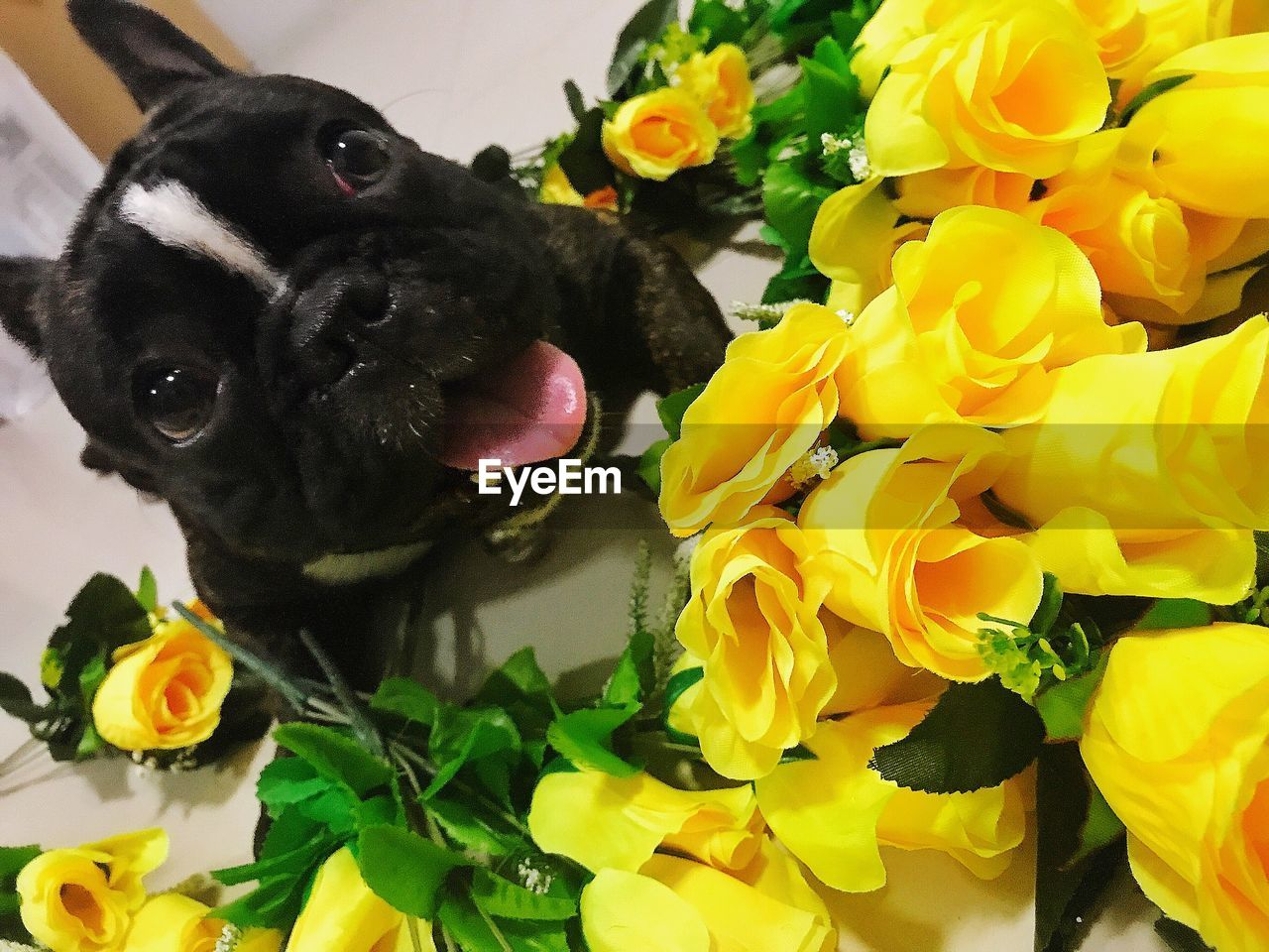 CLOSE-UP OF BLACK FLOWERS WITH YELLOW AND DOG