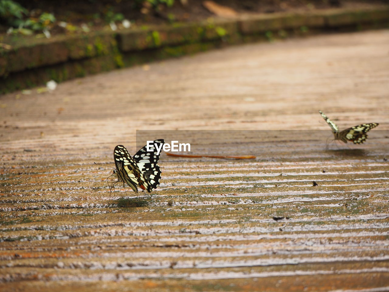 animal themes, animal, animal wildlife, animals in the wild, invertebrate, group of animals, insect, no people, selective focus, day, two animals, focus on foreground, nature, close-up, beauty in nature, outdoors, wood - material, animal wing, vertebrate, butterfly - insect, surface level