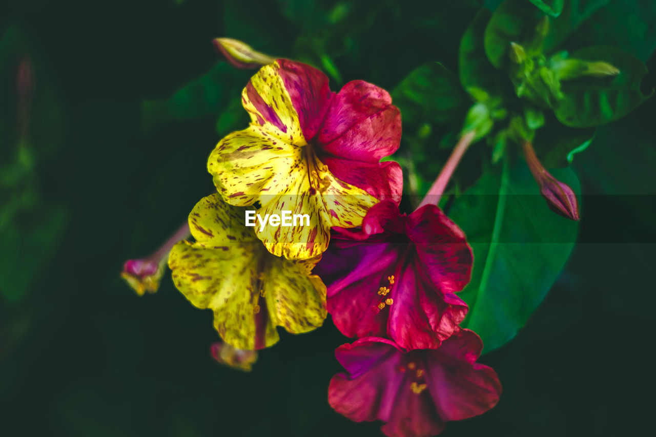 flower, petal, fragility, beauty in nature, freshness, growth, flower head, nature, green color, close-up, no people, outdoors, plant, day, leaf