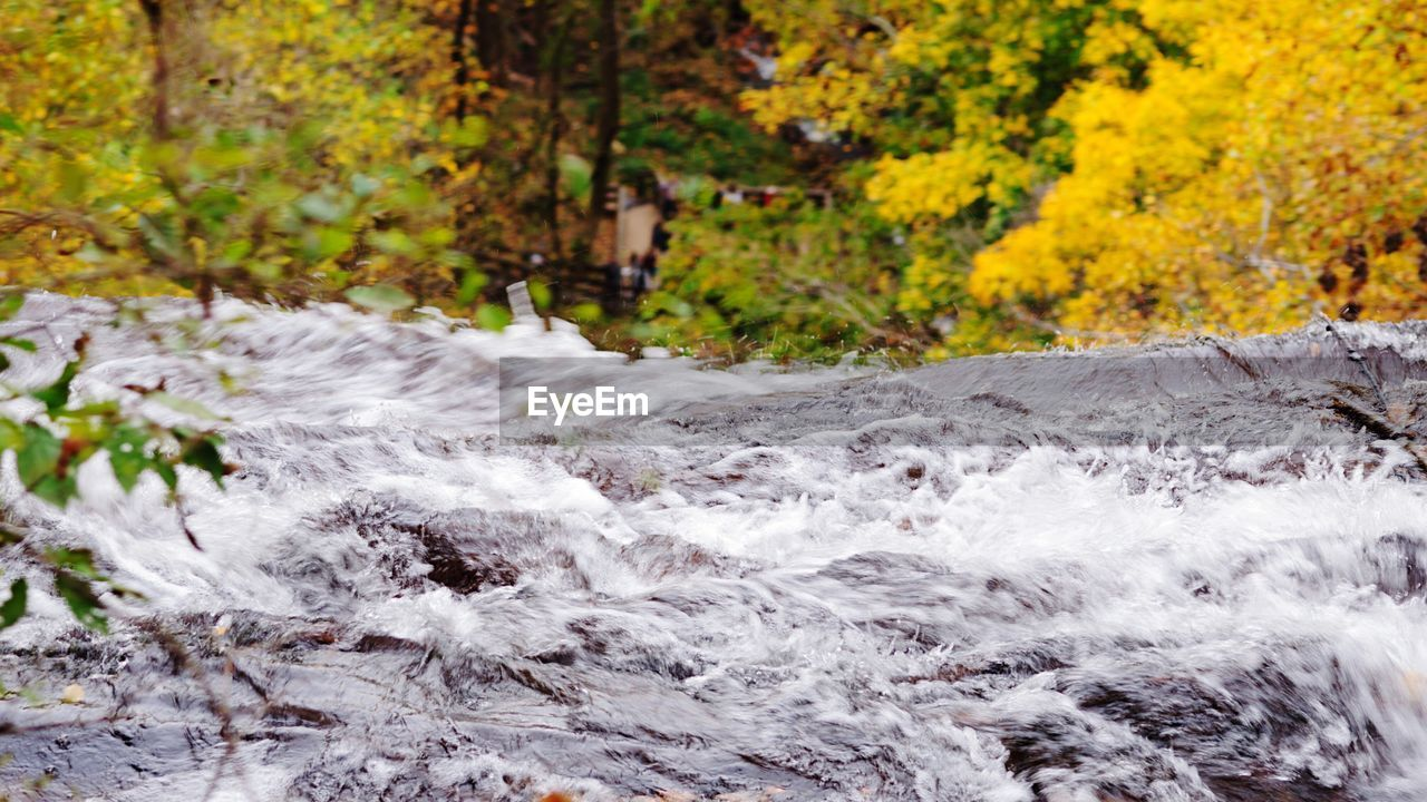 nature, autumn, motion, water, tree, forest, outdoors, waterfall, beauty in nature, day, leaf, no people, scenics, close-up