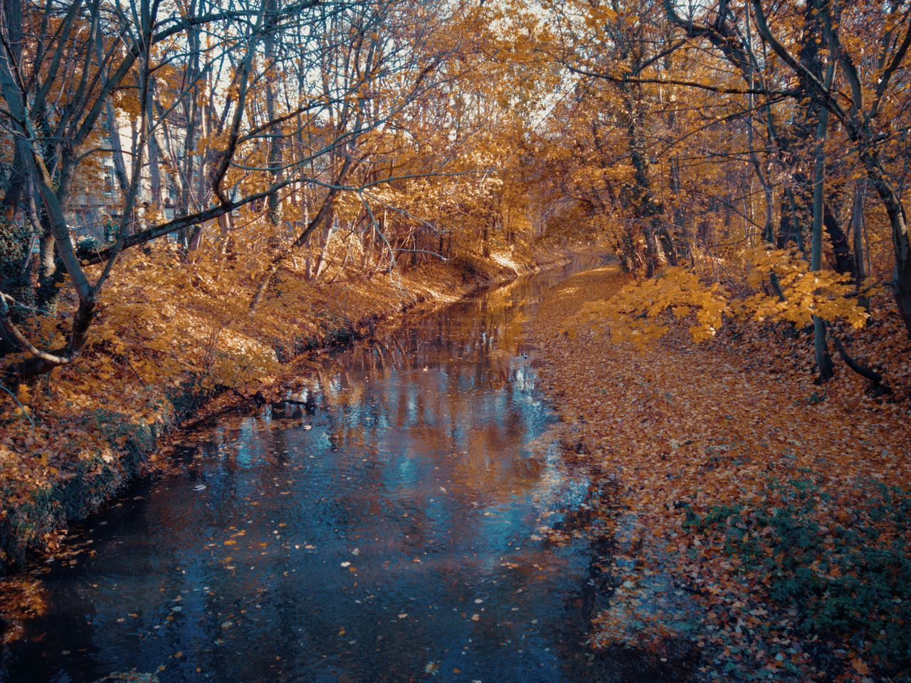 autumn, tree, water, plant, forest, land, change, tranquility, nature, no people, beauty in nature, tranquil scene, scenics - nature, reflection, day, orange color, landscape, plant part, leaf, outdoors, woodland, stream - flowing water, autumn collection