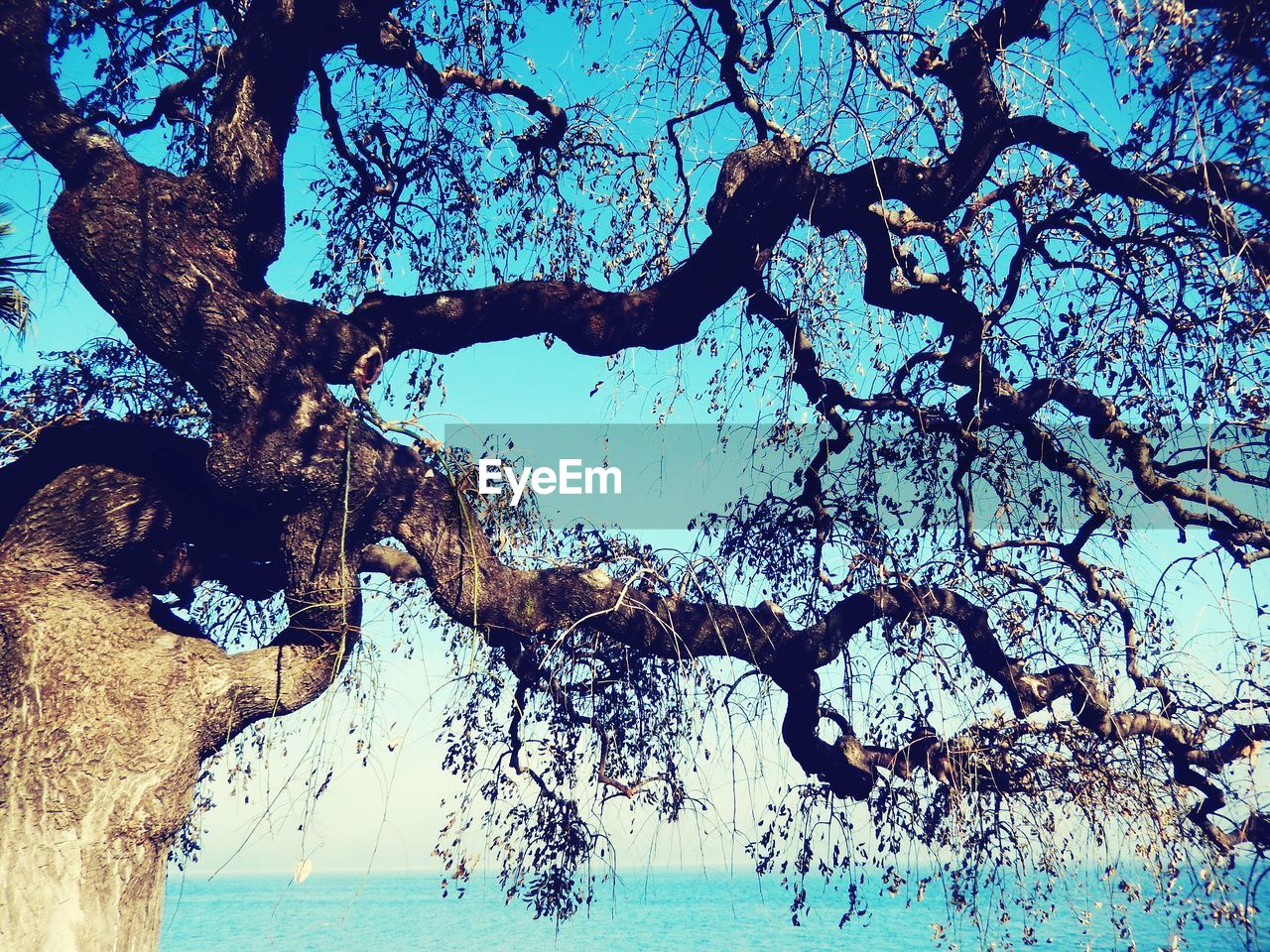 tree, branch, nature, tree trunk, tranquility, water, beauty in nature, outdoors, day, scenics, no people, blue, growth, bare tree, sea, sky, close-up