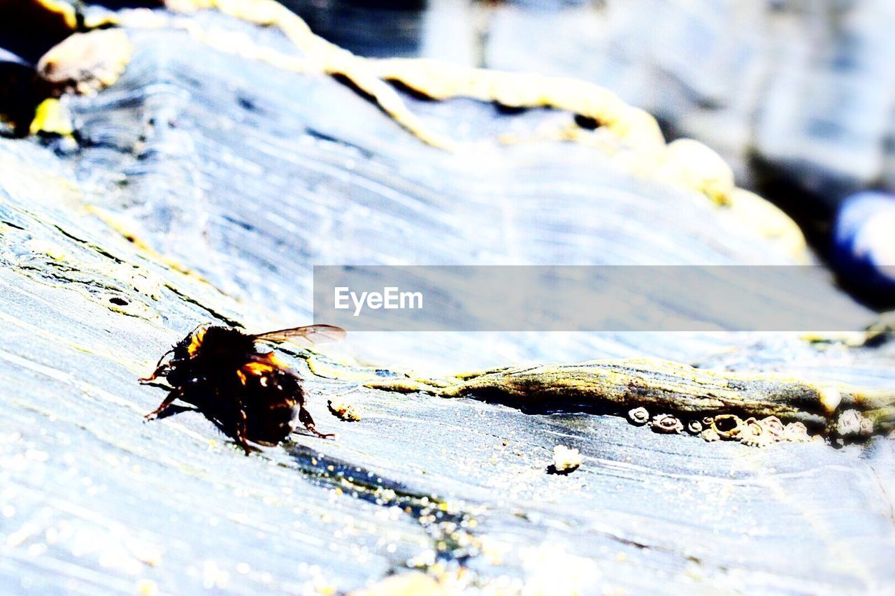insect, animal themes, animals in the wild, close-up, one animal, focus on foreground, no people, day, outdoors, nature