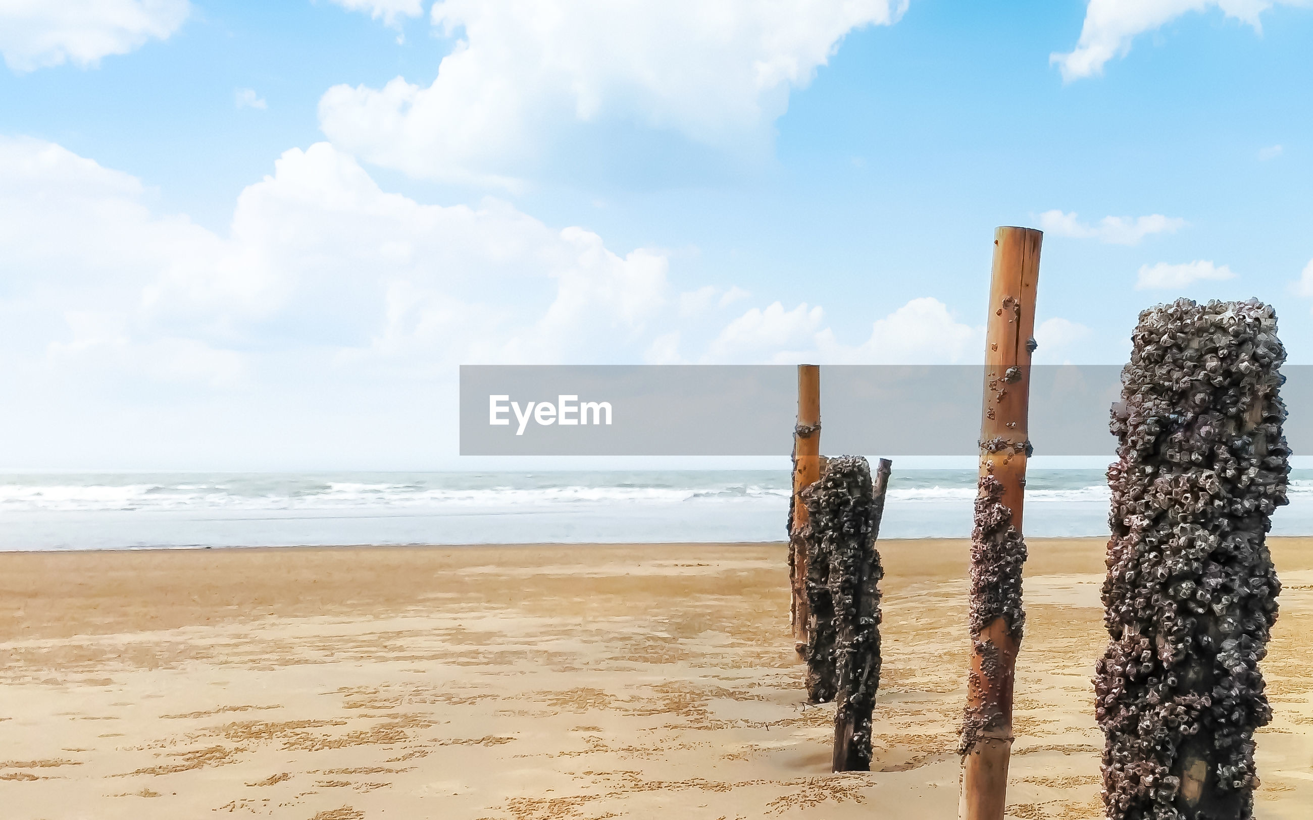 PANORAMIC VIEW OF WOODEN POSTS ON BEACH AGAINST SKY