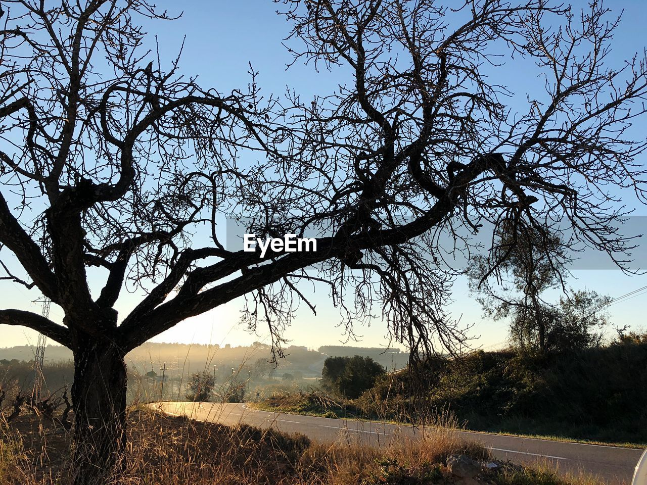 tree, bare tree, landscape, tranquility, nature, tranquil scene, beauty in nature, field, scenics, branch, outdoors, no people, sky, day, lone, clear sky