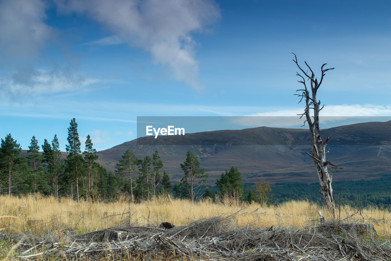 sky, environment, plant, mountain, landscape, scenics - nature, tranquility, tranquil scene, land, cloud - sky, tree, beauty in nature, non-urban scene, nature, no people, day, remote, field, outdoors, mountain range, arid climate