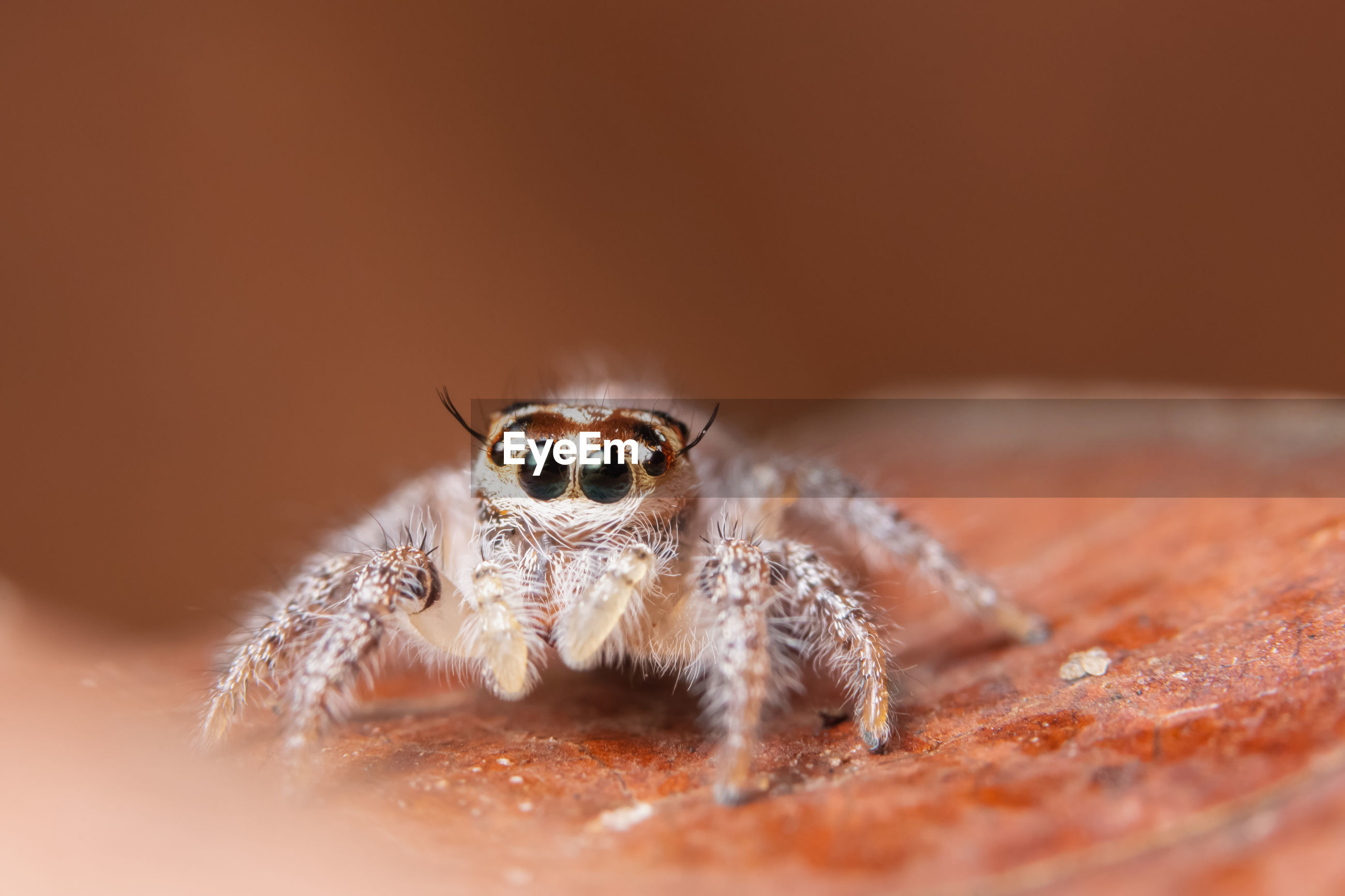 Close-up of jumping spider on rock
