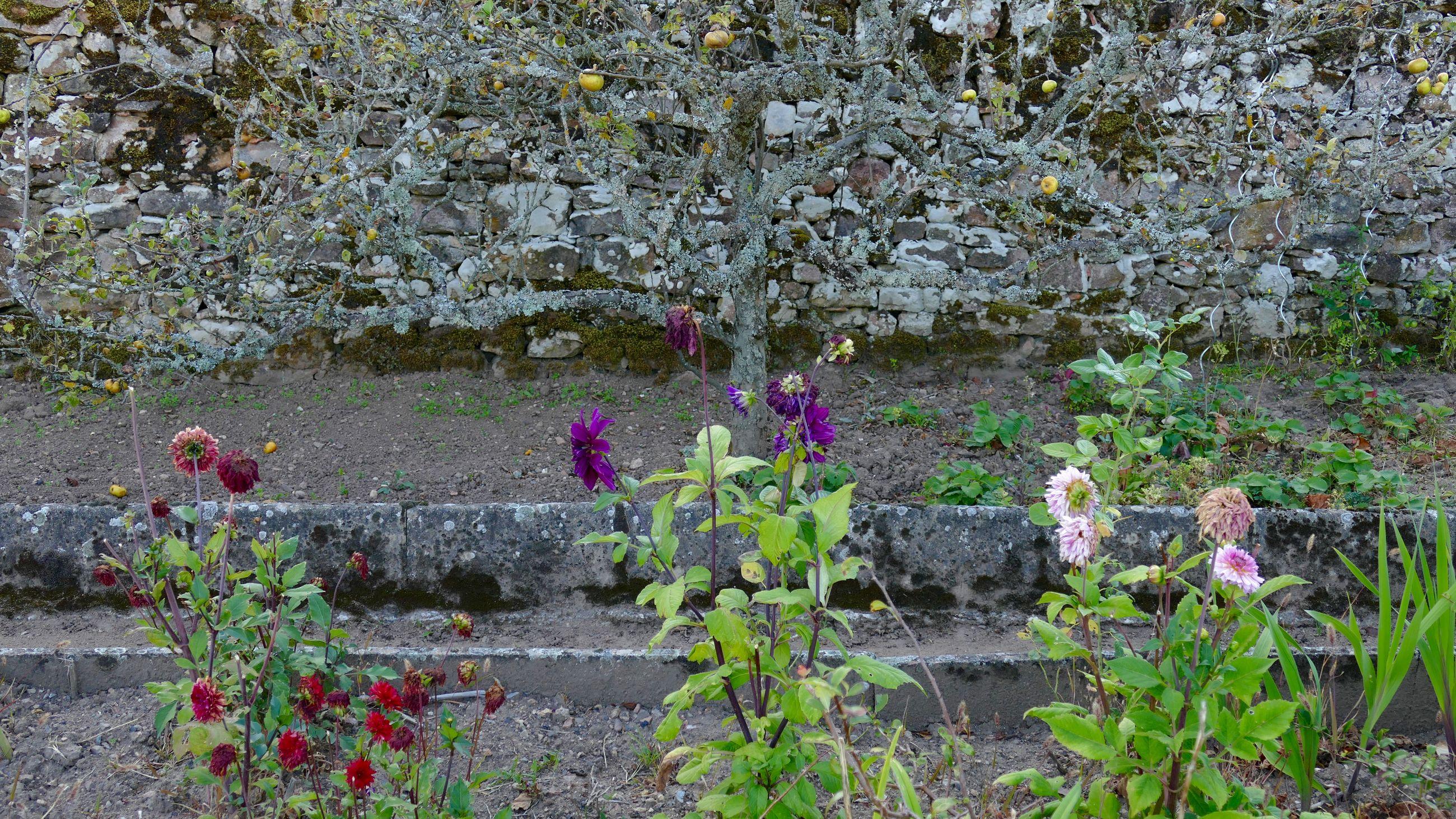 Flowers growing in yard