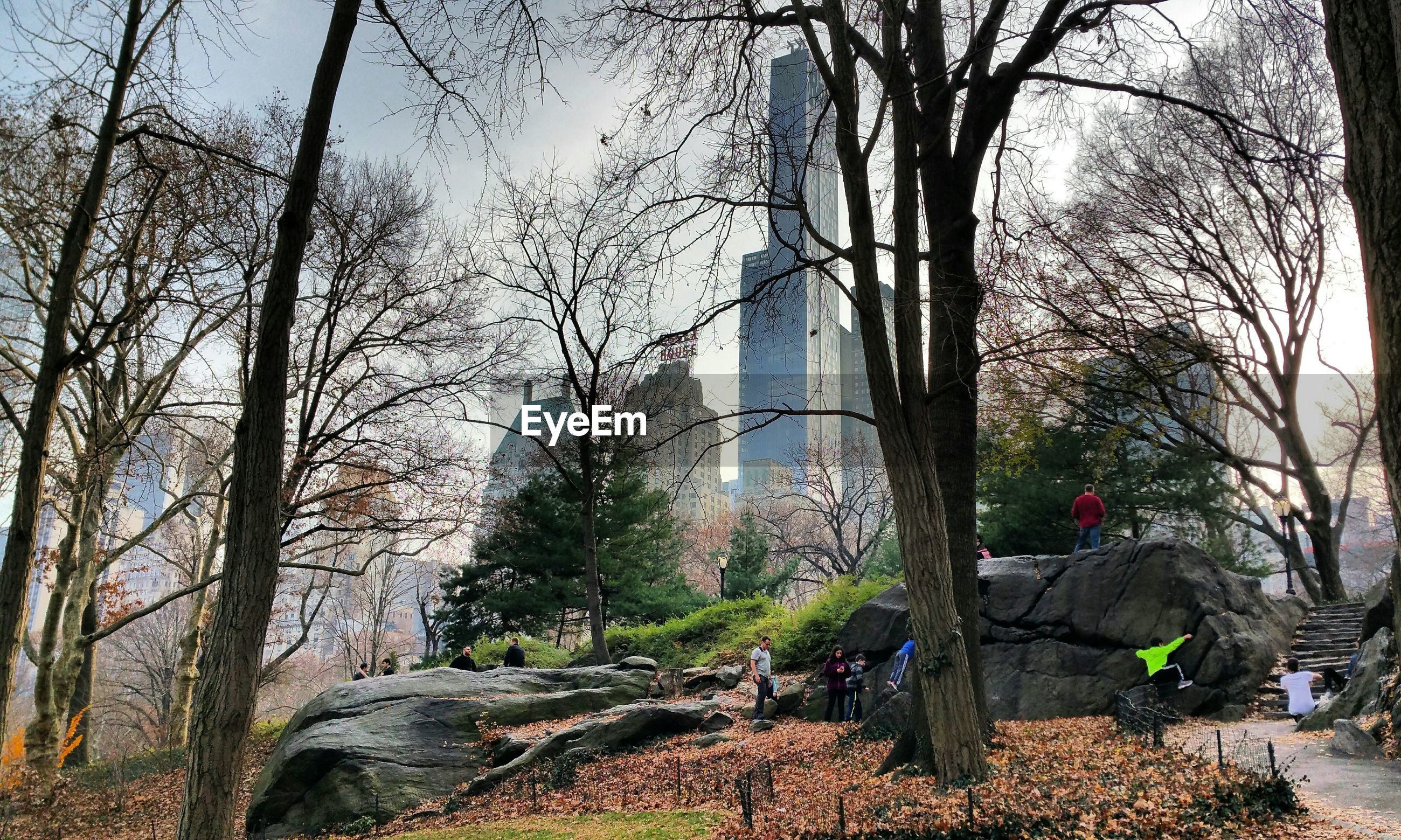 Low angle view of trees and buildings at central park