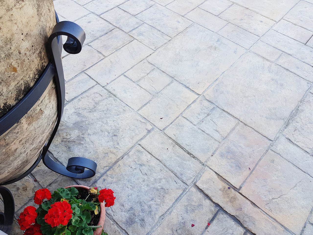 flower, flowering plant, high angle view, plant, footpath, day, tile, nature, flooring, tiled floor, no people, outdoors, stone, red, freshness, street, transportation, growth, beauty in nature, low section, paving stone