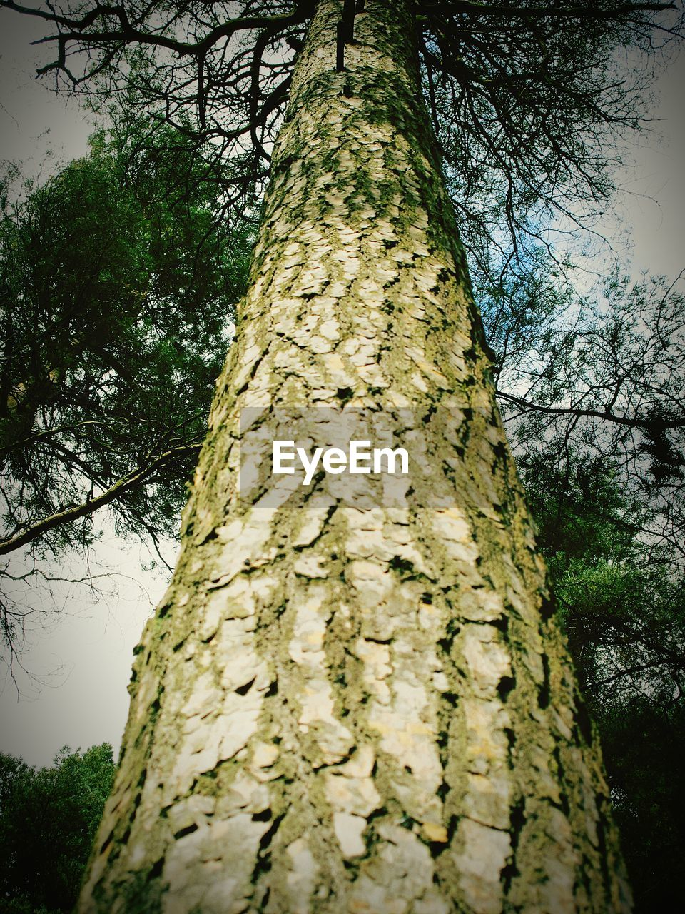 tree trunk, tree, nature, low angle view, growth, day, branch, outdoors, no people, bark, beauty in nature, sky, forest, close-up
