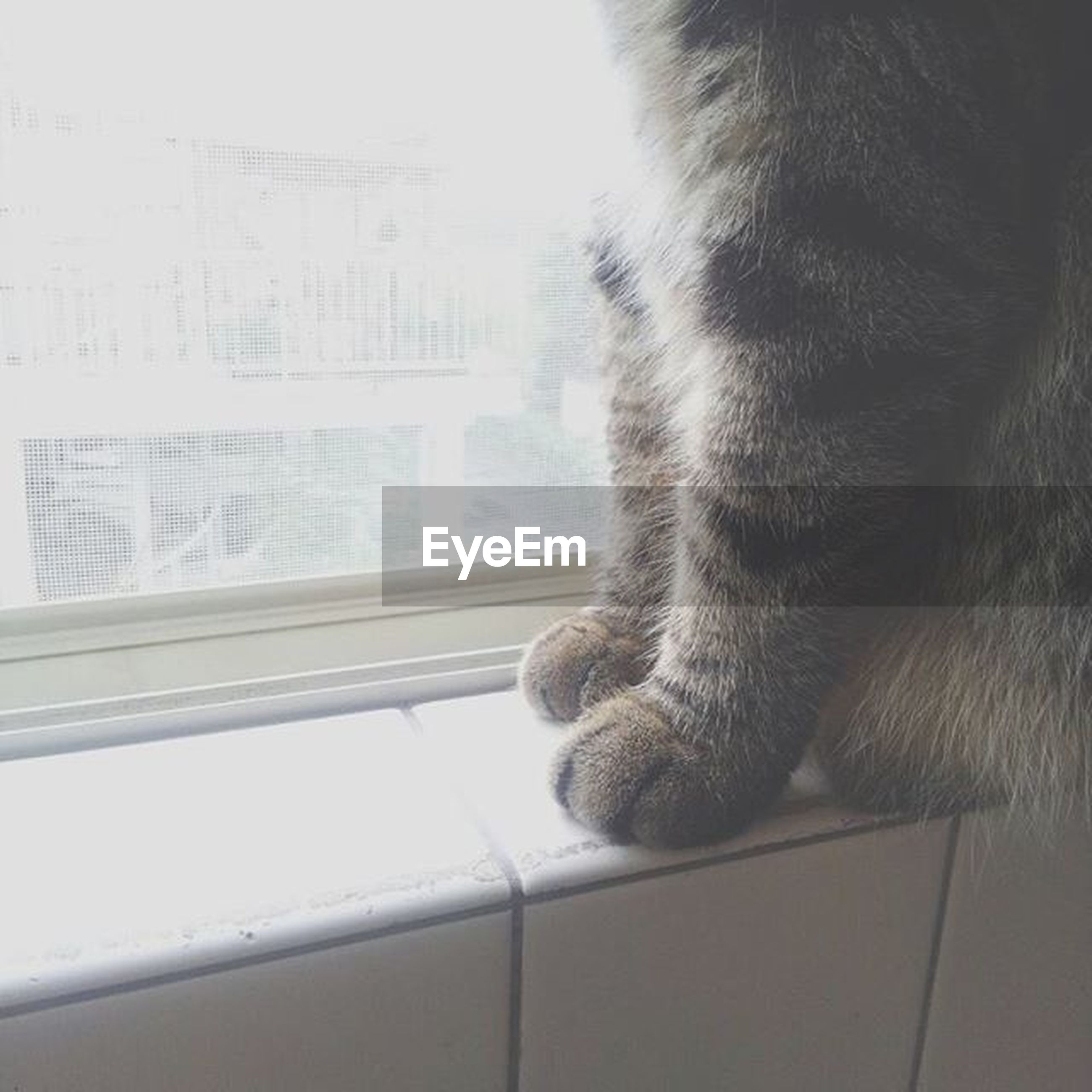 one animal, window, indoors, animal themes, domestic animals, pets, mammal, glass - material, transparent, looking through window, close-up, domestic cat, day, part of, reflection, water, cat, railing, dog, side view