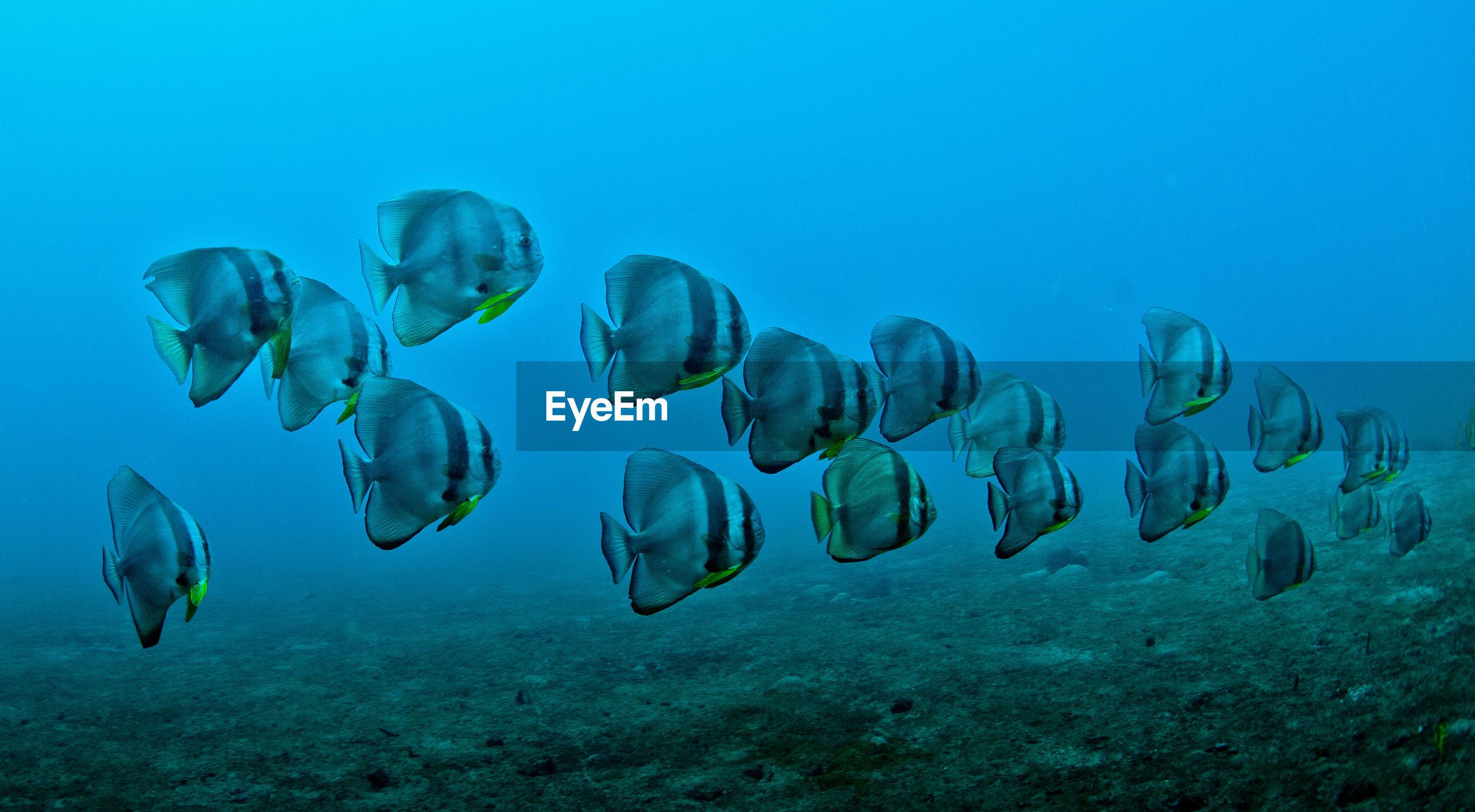 School of fish swimming under water