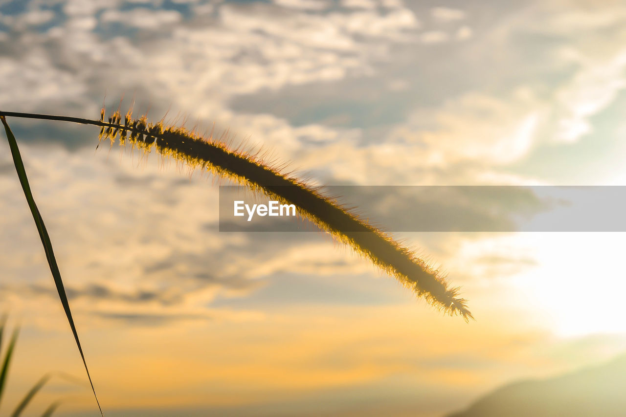 cloud - sky, sky, beauty in nature, nature, no people, sunset, low angle view, plant, outdoors, growth, day, focus on foreground, vapor trail, scenics - nature, tranquility, selective focus, silhouette, orange color, tree