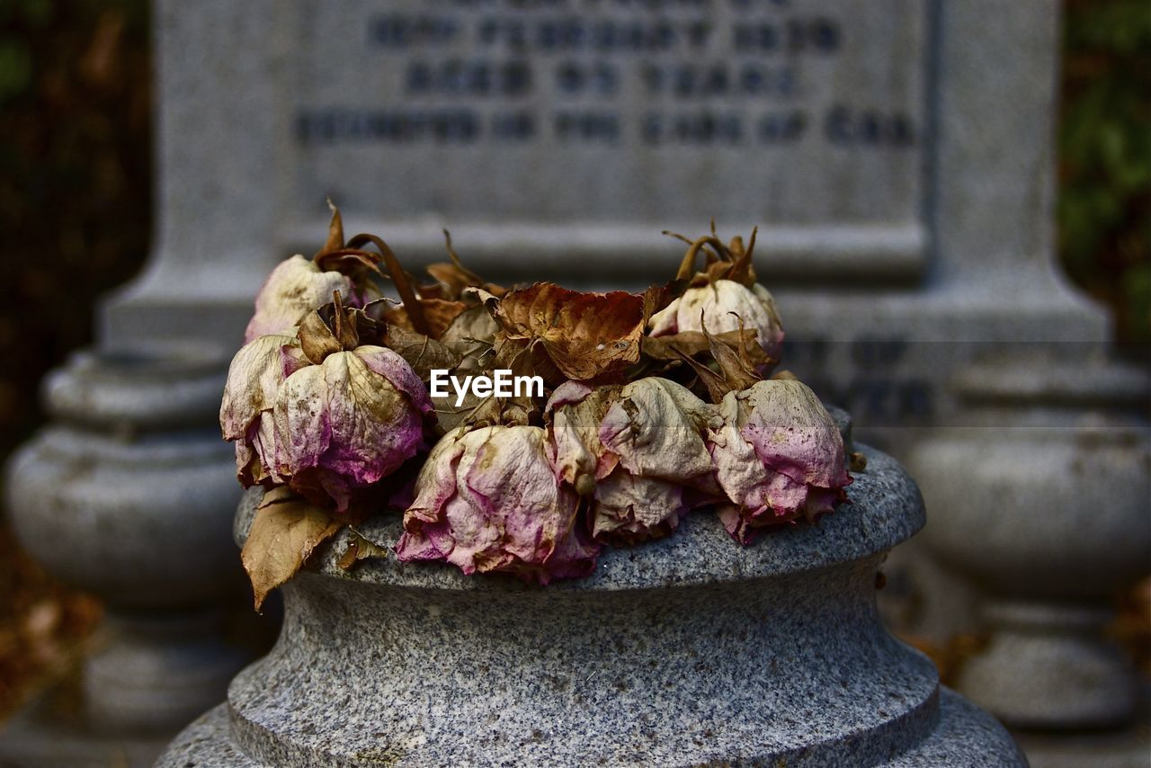 Close-Up Of Dry Flowers On Cemetery At Graveyard