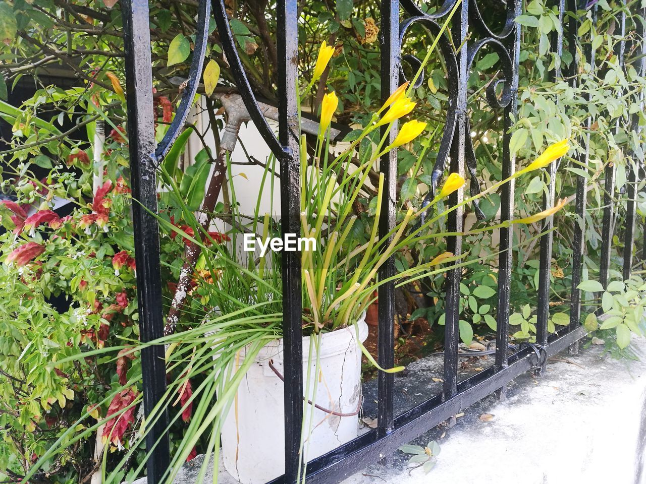 plant, growth, nature, no people, green color, day, beauty in nature, plant part, outdoors, leaf, barrier, metal, architecture, boundary, tree, fence, gate, railing, botany, built structure, bamboo - plant