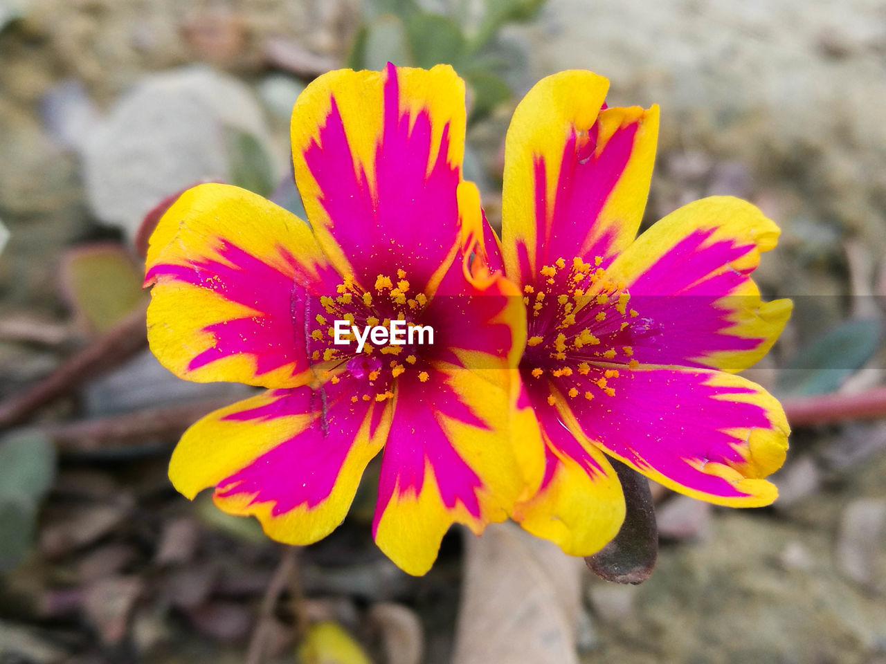 flower, petal, fragility, flower head, nature, focus on foreground, freshness, growth, beauty in nature, plant, day, outdoors, close-up, yellow, no people, blooming