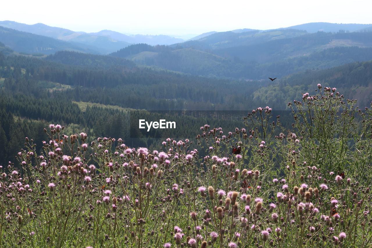 VIEW OF FLOWERING PLANTS ON FIELD