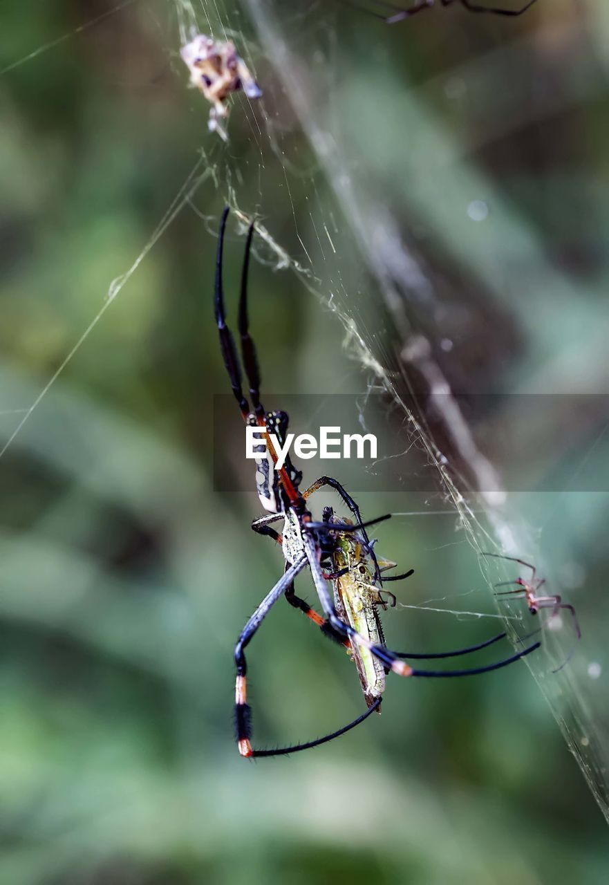 invertebrate, insect, animal themes, animal, animals in the wild, one animal, animal wildlife, fragility, close-up, focus on foreground, spider web, spider, arachnid, arthropod, no people, vulnerability, day, nature, survival, animal body part, web, outdoors, animal leg