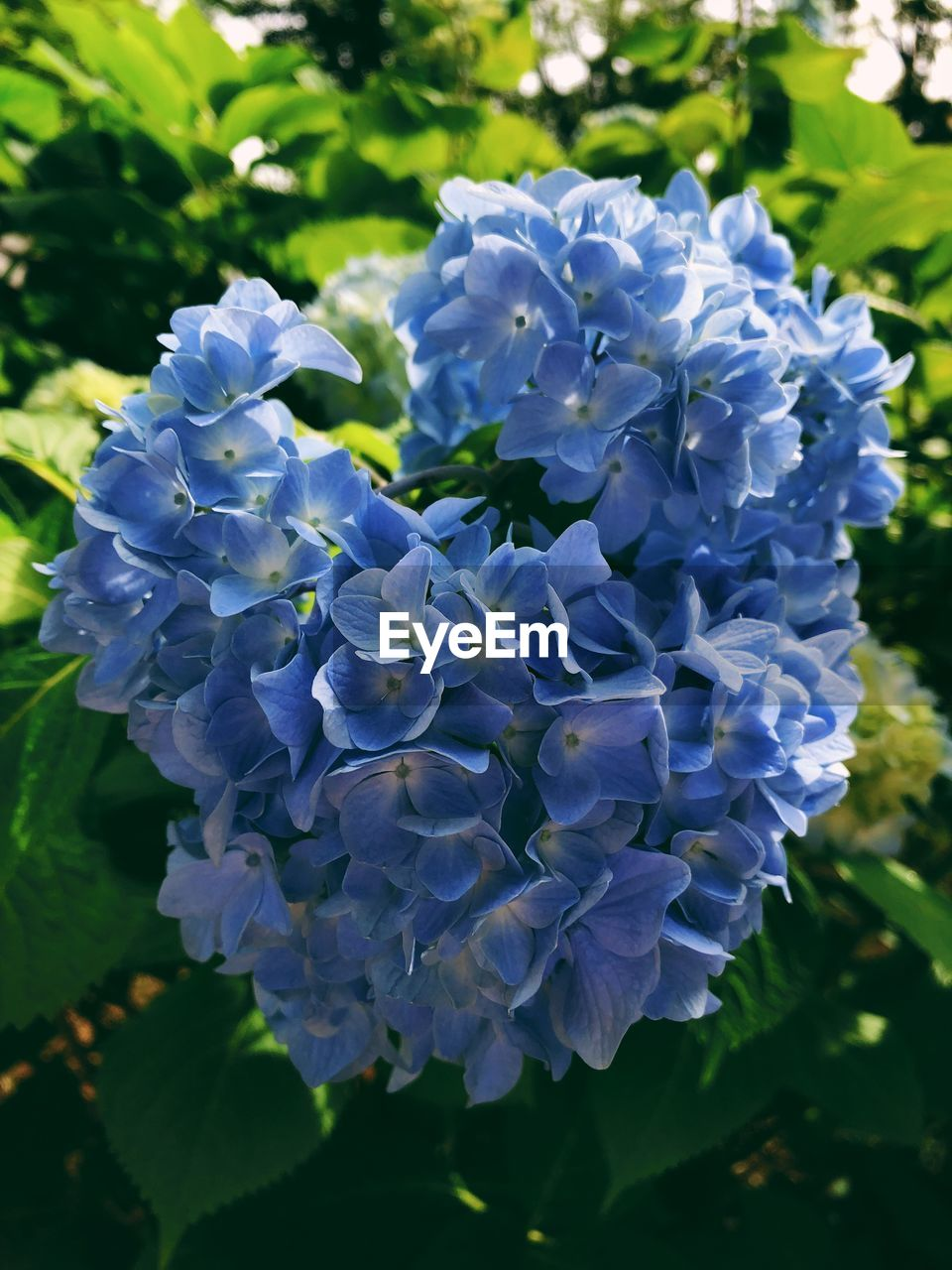 flowering plant, flower, fragility, beauty in nature, vulnerability, plant, freshness, petal, growth, close-up, inflorescence, flower head, nature, day, purple, focus on foreground, no people, blue, outdoors, plant part, bunch of flowers, lilac