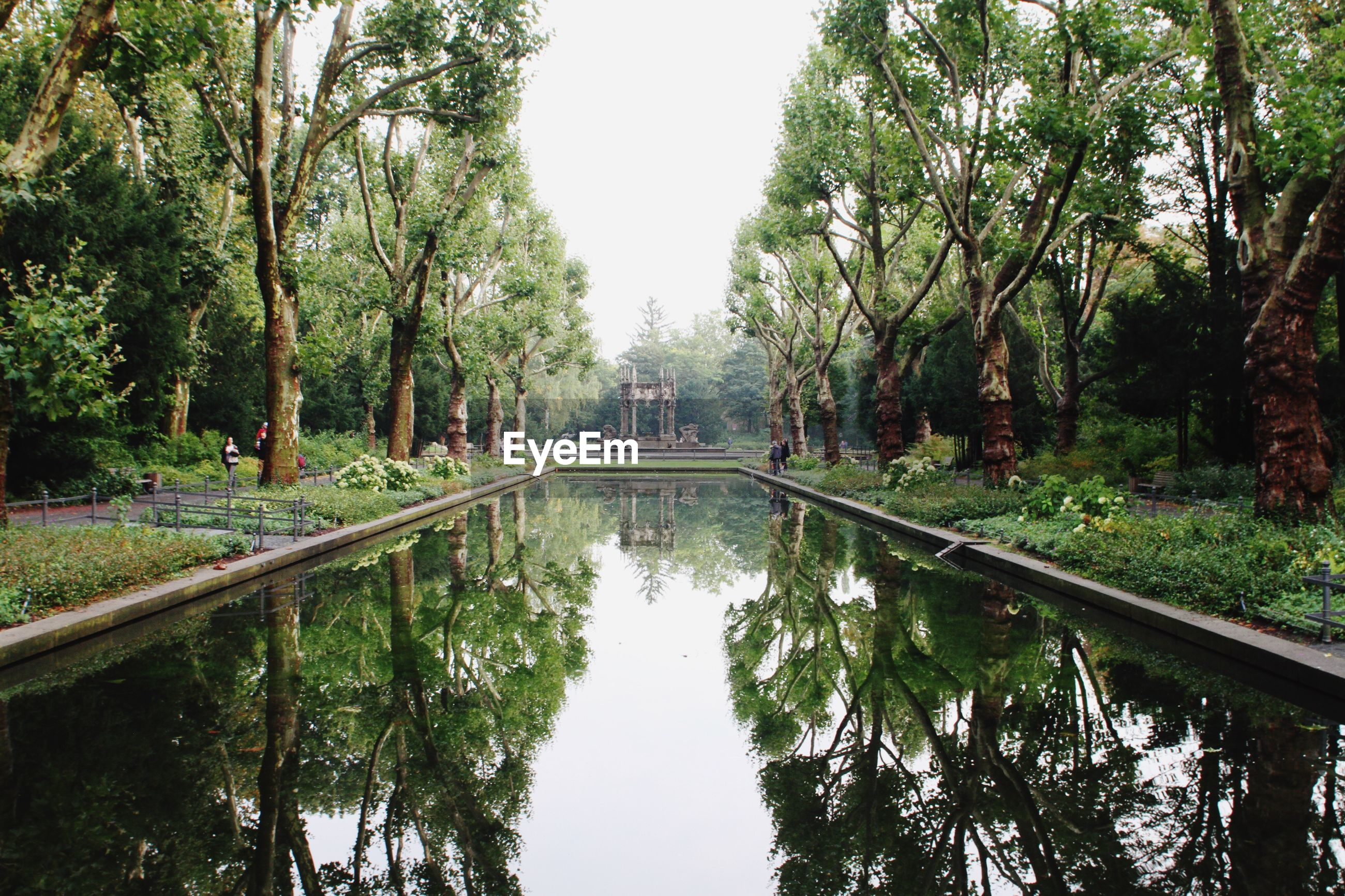 REFLECTION OF TREES ON WATER IN PARK