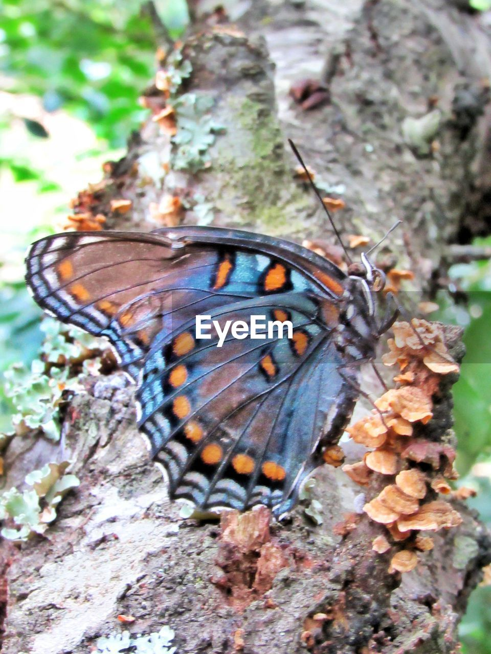 invertebrate, insect, animal themes, animal wildlife, butterfly - insect, animal wing, one animal, animal, animals in the wild, close-up, beauty in nature, nature, day, no people, focus on foreground, plant, tree, butterfly, animal markings, outdoors