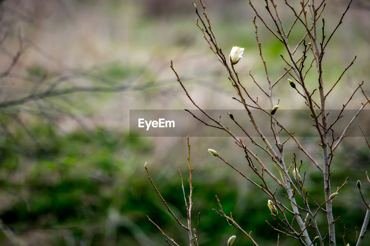 plant, growth, focus on foreground, no people, nature, close-up, tranquility, day, beauty in nature, selective focus, outdoors, green color, plant stem, tree, land, dry, dead plant, branch, field, twig