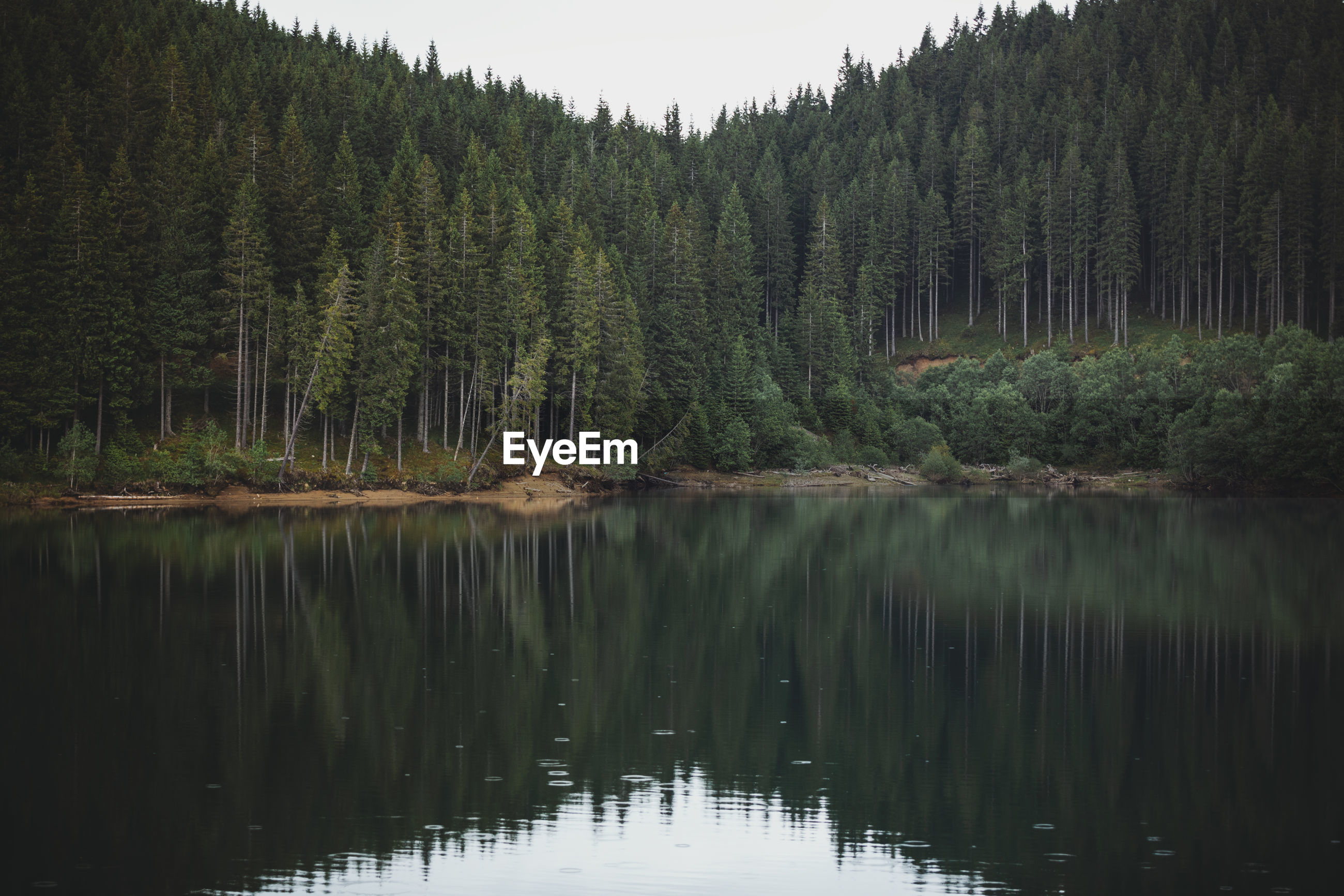 SCENIC VIEW OF LAKE WITH TREES IN FOREST