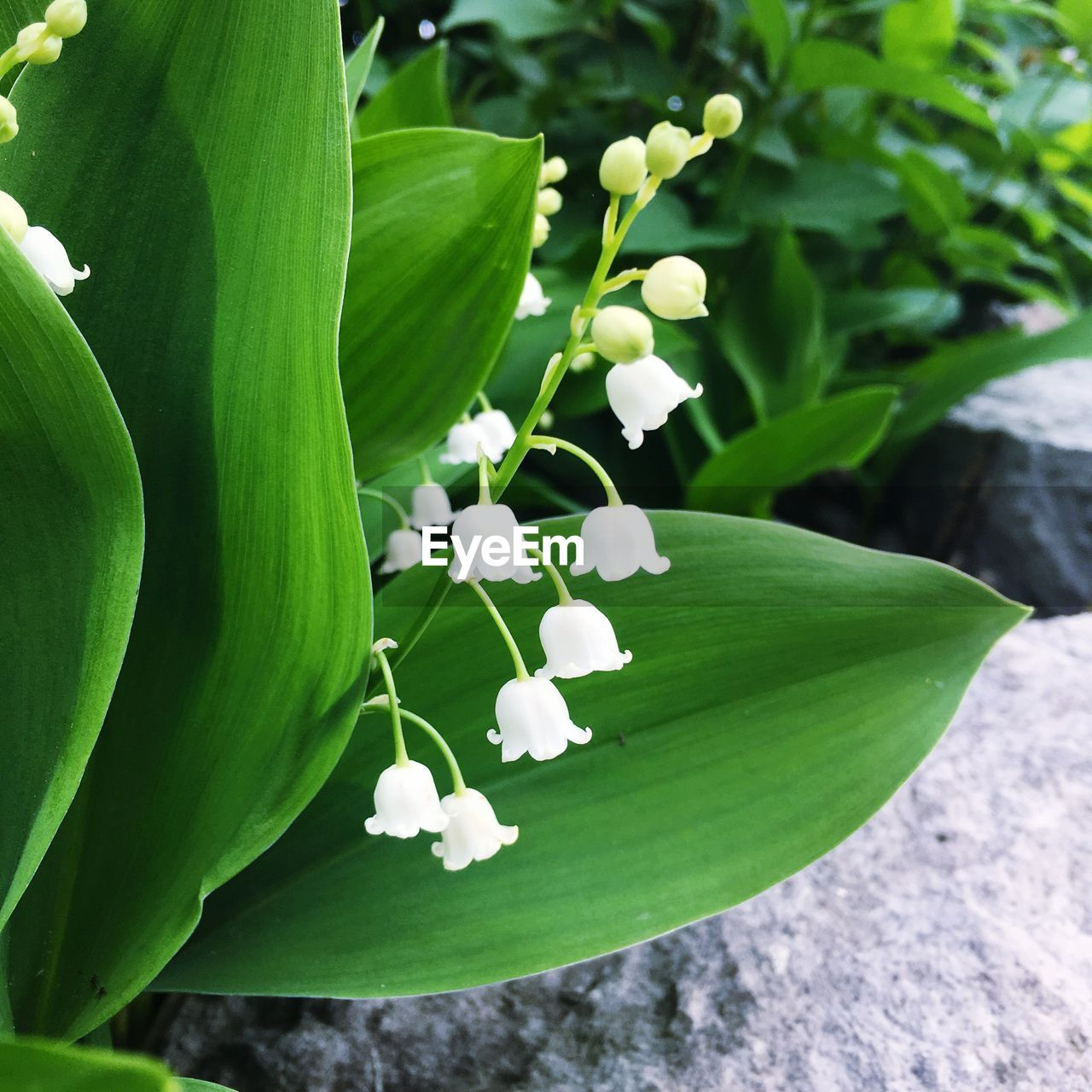freshness, growth, green color, leaf, beauty in nature, fragility, flower, petal, nature, no people, day, close-up, outdoors, plant, flower head, blooming