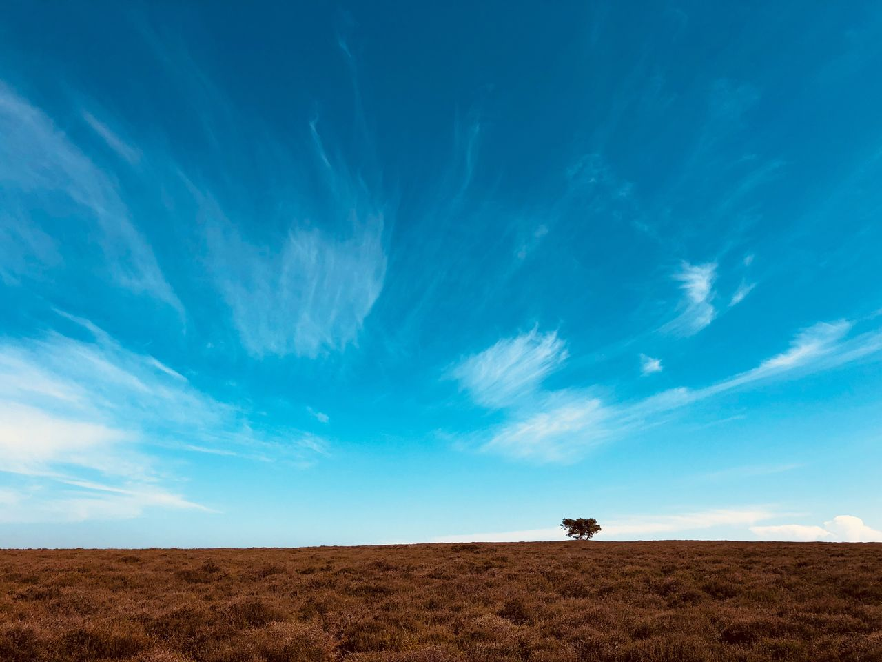 sky, cloud - sky, landscape, land, environment, blue, beauty in nature, nature, scenics - nature, horizon over land, horizon, field, mammal, animal, animal themes, tranquil scene, non-urban scene, tranquility, day, domestic animals, no people, arid climate