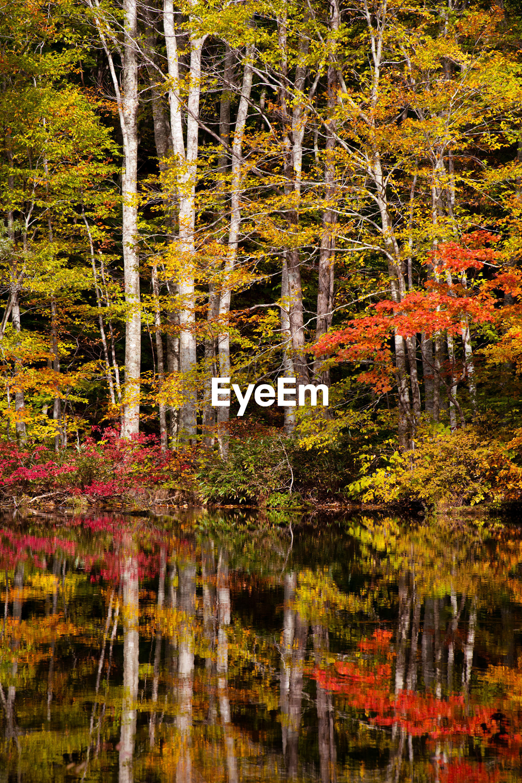 Trees by lake in forest during autumn