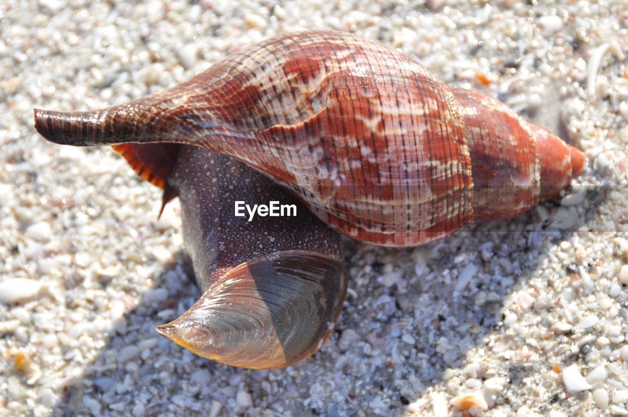 Detail shot of snail
