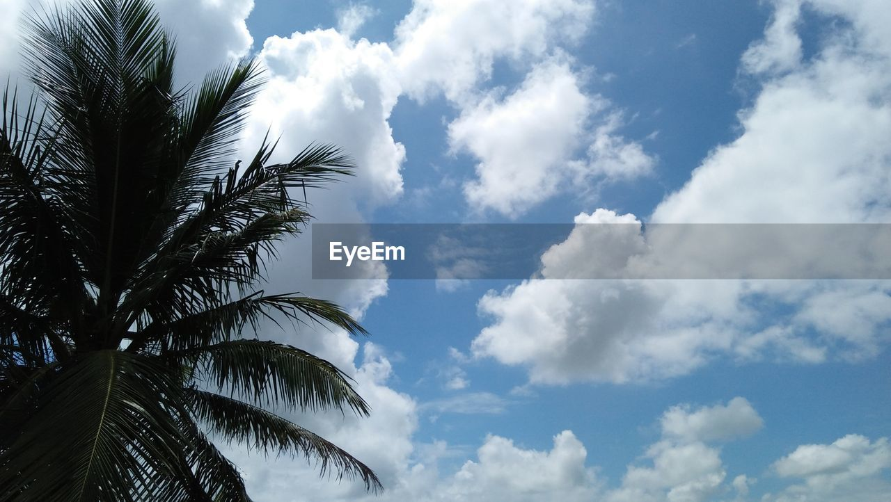 cloud - sky, sky, tropical climate, tree, palm tree, low angle view, plant, beauty in nature, nature, tranquility, leaf, growth, day, palm leaf, no people, scenics - nature, tranquil scene, outdoors, plant part, tropical tree, coconut palm tree