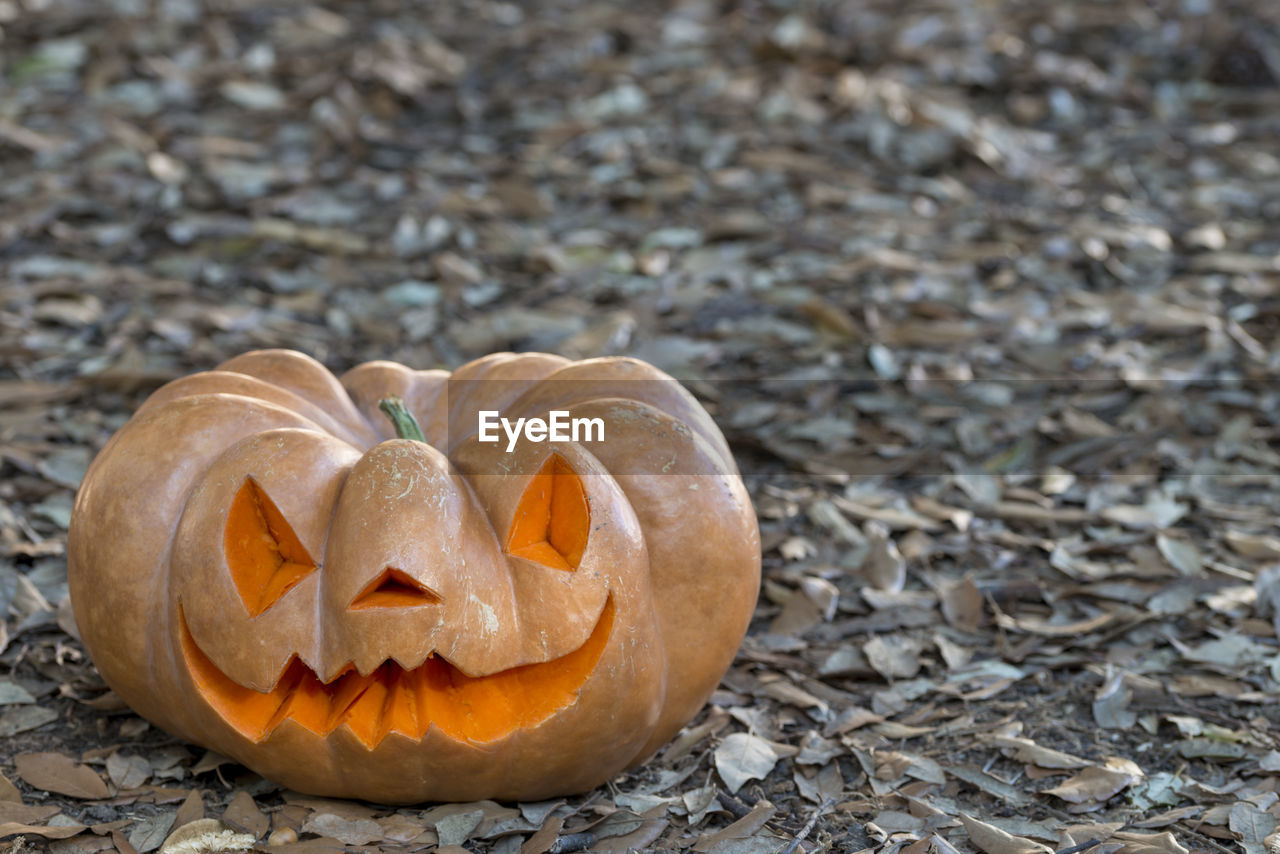halloween, food and drink, pumpkin, food, celebration, face, jack o' lantern, anthropomorphic face, no people, anthropomorphic, close-up, creativity, autumn, day, orange color, craft, vegetable, focus on foreground, land, outdoors