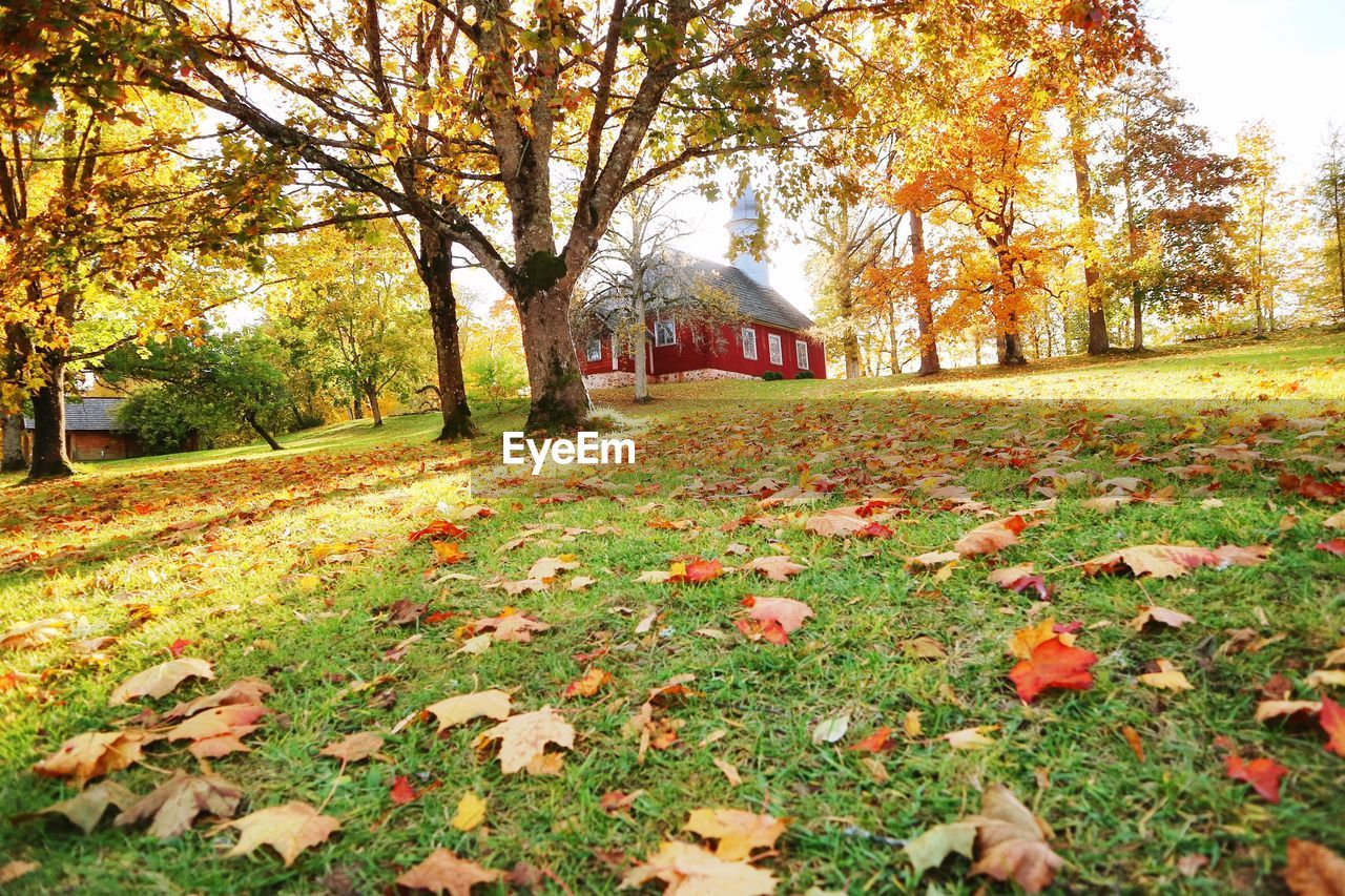 autumn, plant, tree, change, plant part, leaf, nature, day, growth, land, beauty in nature, park, no people, falling, architecture, built structure, tranquility, orange color, outdoors, grass, leaves, fall