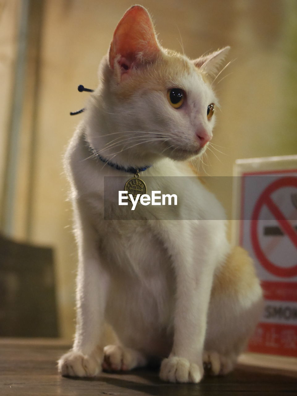 domestic cat, pets, animal themes, domestic animals, feline, mammal, one animal, whisker, sitting, indoors, no people, day, close-up