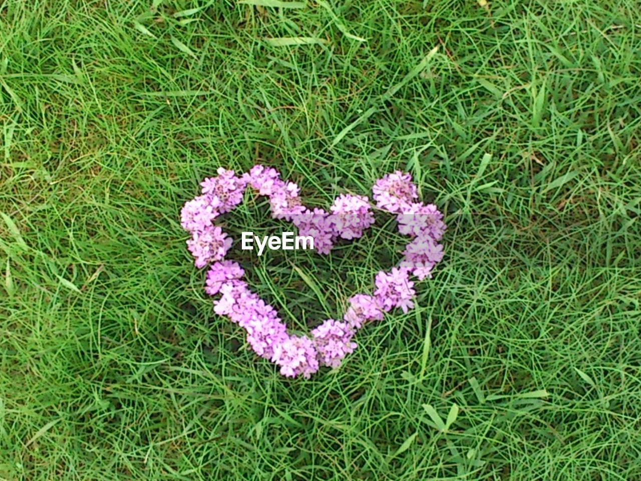High Angle View Of Heart Shape Of Purple Flowers On Grassy Field