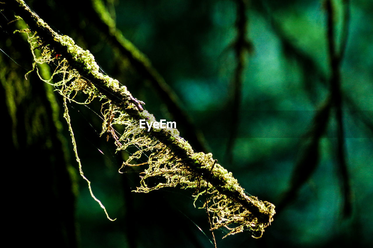 green color, focus on foreground, no people, nature, close-up, day, growth, branch, outdoors, plant, beauty in nature