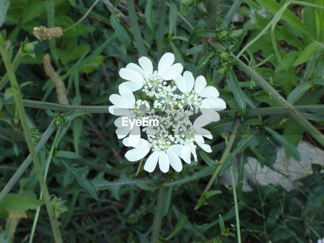 flower, growth, nature, white color, beauty in nature, plant, freshness, green color, fragility, petal, high angle view, no people, outdoors, blooming, flower head, day, leaf, grass, close-up