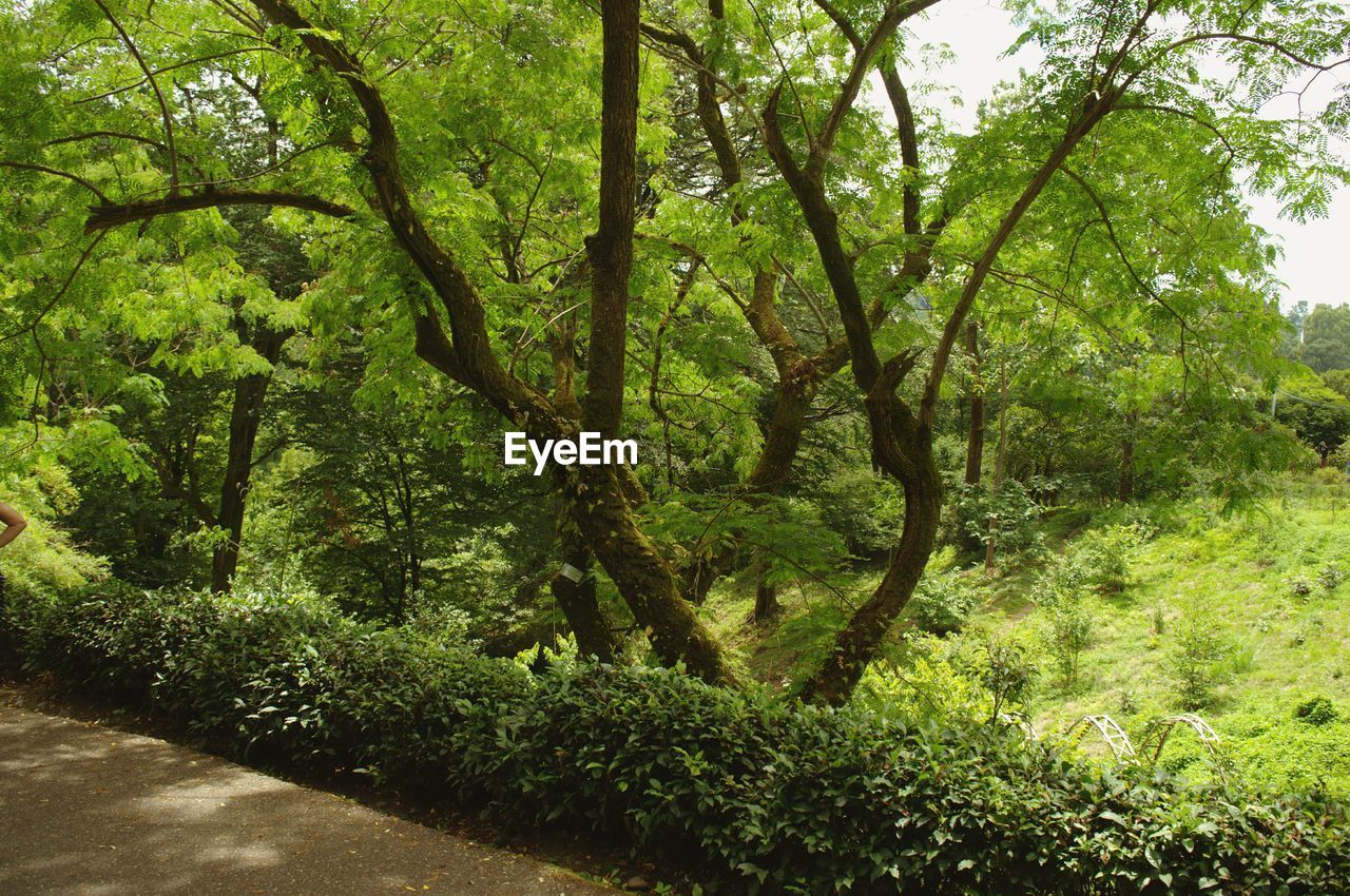 nature, tree, growth, day, outdoors, forest, plant, no people, beauty in nature