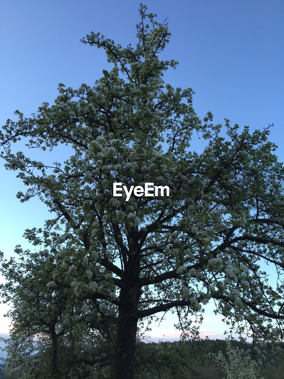 tree, low angle view, growth, nature, branch, beauty in nature, no people, day, clear sky, outdoors, tranquility, flower, sky, freshness