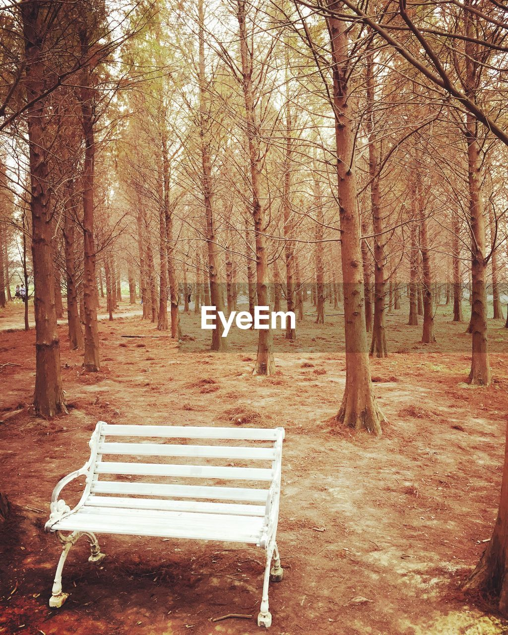 tree, absence, no people, chair, tranquility, day, tranquil scene, nature, outdoors, beauty in nature, sky