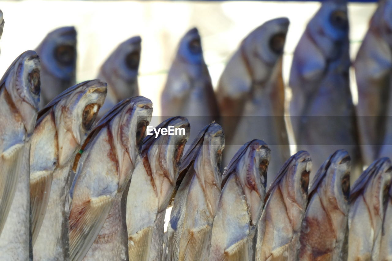 seafood, fish, food, animal, food and drink, vertebrate, freshness, wellbeing, healthy eating, no people, for sale, group of animals, close-up, in a row, retail, raw food, animal themes, market, fishing, fish market, fishing industry