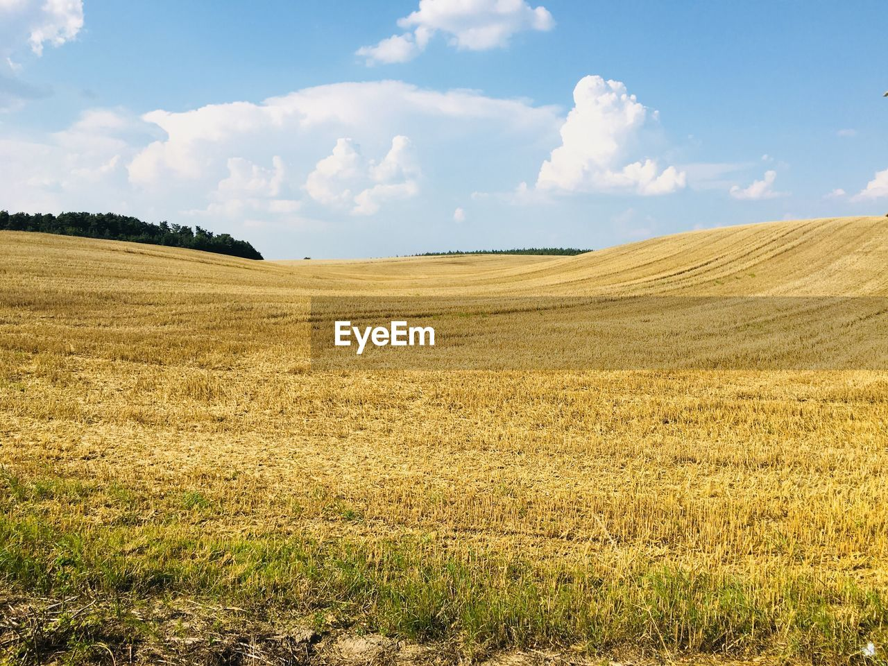 sky, land, landscape, tranquil scene, environment, field, tranquility, cloud - sky, beauty in nature, rural scene, agriculture, scenics - nature, day, nature, plant, no people, horizon, growth, horizon over land, sunlight, outdoors, plantation