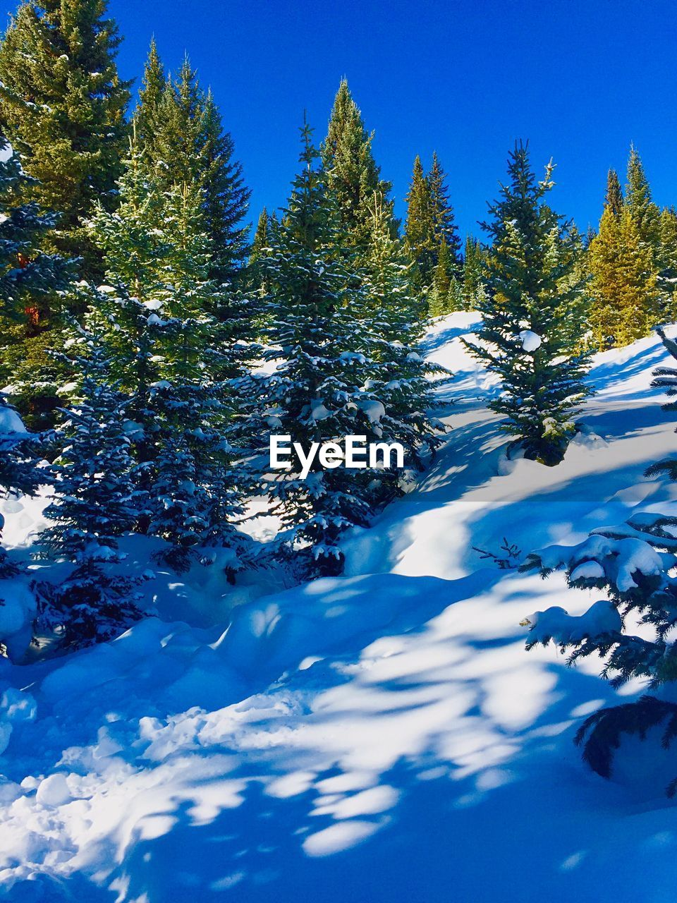 tree, plant, beauty in nature, winter, snow, tranquility, cold temperature, growth, blue, day, scenics - nature, nature, no people, tranquil scene, sunlight, sky, non-urban scene, land, mountain, coniferous tree, pine tree, snowcapped mountain