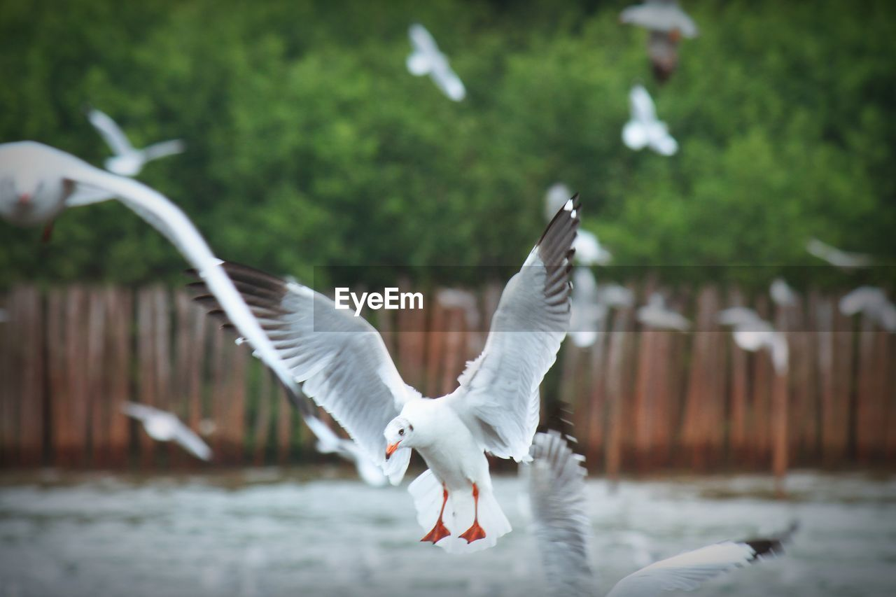 Seagulls Flying Outdoors